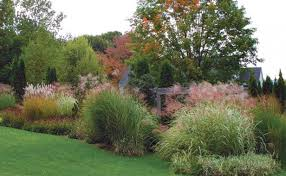 designing with grasses gardening