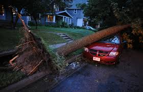 who must pay when trees fall down startribune com