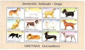 weimaraner vs afghan hound grs9508co 12dogs jpg