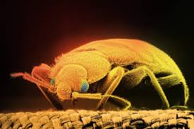 Bed Bug Fogger Bug Bombs And Foggers Can U0027t Kill Bed Bugs Time Com