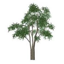 sketchup plants trees and shrubs archive