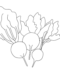 free printable beet coloring page