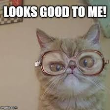 Glasses Meme - funny cat with glasses meme generator imgflip