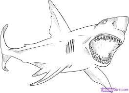 coloring trendy easy sharks draw white shark