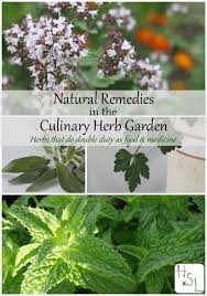 herbal garden natural remedies in the culinary herb garden homespun seasonal living