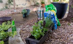 Plant Combination Ideas For Container Gardens - best vegetable u0026 herb container combinations miracle gro