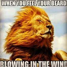 Wind Meme - when you feel your beard blowing in the wind beard meme beard