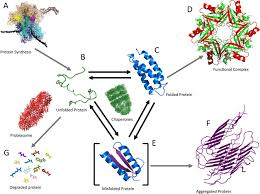 when fast is better protein folding fundamentals and mechanisms