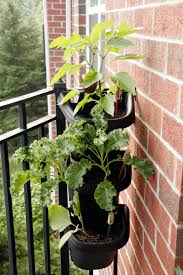 plants for small apartments garden ideas