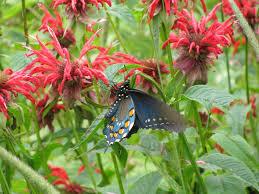 native plants that attract butterflies the 13 best flowers for a butterfly garden kremp florist blog