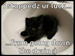 Good Luck Cat Meme - why it s a good idea to adopt black cats google search