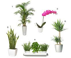 best indoor plants singapore best indoor plants that grow