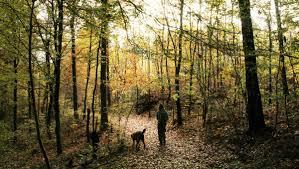 Bad Grund Auf Der Suche Nach Dem Goldenen Herbst U2013 Arboretum Weltwald Im