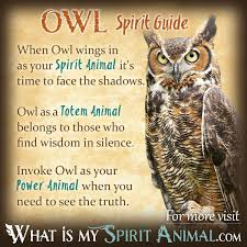 Hit The Floor Meaning - owl symbolism u0026 meaning spirit totem u0026 power animal