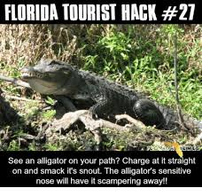 Florida Meme - florida tourist hack 27 memes see an alligator on your path charge