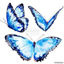 beautiful blue butterfly watercolor isolated on a white stock
