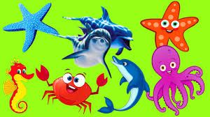learn sea animals cartoon for kids video puzzles with