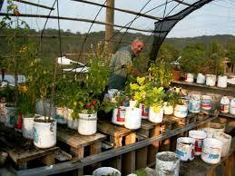 tropical belizean organic hydroponics garden