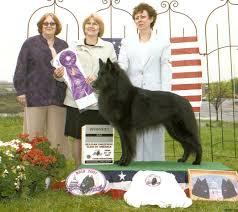 belgian sheepdog newsletter 2007 frederick md belgian sheepdog club of america