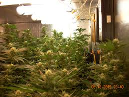 how much light do pot plants need fluorescent lights growing plants with fluorescent lights growing