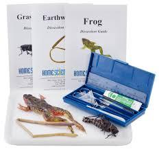 grasshopper dissection specimen large 3