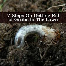 How To Get Rid Of A Skunk In Your Backyard 34 Best Tuin Ziektes Bij Planten Garden Plant Diseases Images