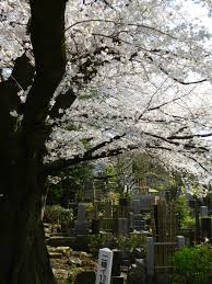 a stroll through the cemetery during season hey from japan