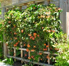 fence gardendishes