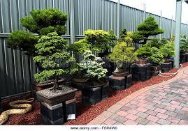 bonsai trees exhibition stock photos bonsai trees exhibition