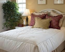 plantes dépolluantes chambre à coucher dans la maison a chaque pièce ses plantes gamm vert