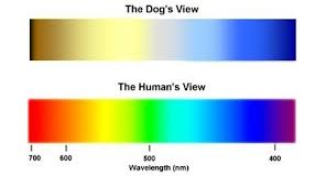Blue Green Color Blindness Are Dogs Colour Blind Updated 2017 Quora