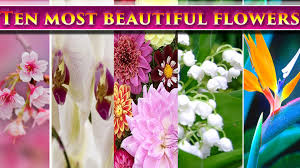 Pictures Of Beautiful Flowers In The World - top 10 most beautiful flowers in the world youtube
