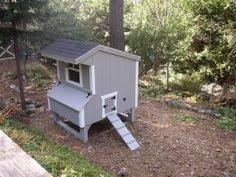 Backyard Chickens Forum by Yes I Want A Couple Hens Laying Fresh Eggs Chicken Coops