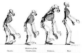monogenism or polygenism the question of human origins strange