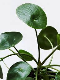 Green Plants 209 Best Nature Plants Images On Pinterest Botany Plants And