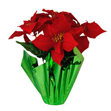 poinsettias clipart free download clip art free clip art on