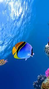 underwater paradise iphone wallpapers mobile9 underwater fish