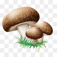 shiitake mushroom png vectors psd and icons for free download