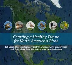 Backyard Bird Store Report From Boreal Songbird Initiative Indicates Migrating Birds