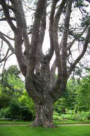 677 best trees images on pinterest nature gardening and landscaping