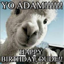 Alpaca Meme - yo adam adam birthday meme on memegen