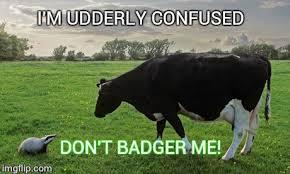 Badger Memes - badger mismatch imgflip
