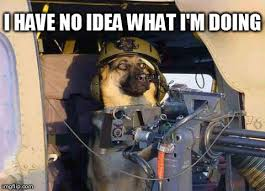I Have No Idea What Im Doing Meme - image tagged in funny dogs i have no idea what i am doing imgflip