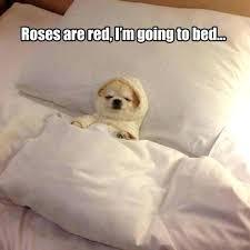 Dog In Bed Meme - dog in bed meme restate co