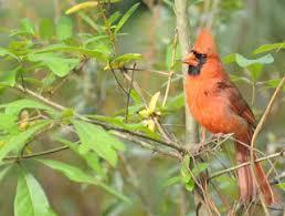 Audubon Backyard Bird Count by Audubon South Carolina Great Backyard Bird Count