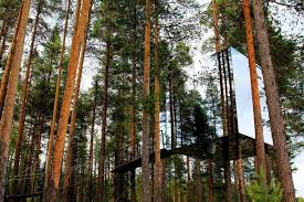 invisible treehouse mirrored walls to make the tree house blend