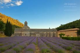 Most Fragrant Lavender Plant Photo 160714 France U2013 Provence Life Explorer