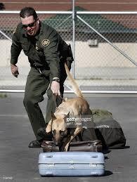 belgian shepherd us army u s customs and border patrol monitors the northern border photos