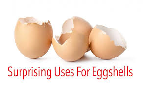 ground eggshells surprising uses for eggshells ohsimply