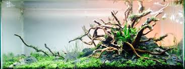Aquascape Store Sil U0027s Aquascapes Page 10 237879
